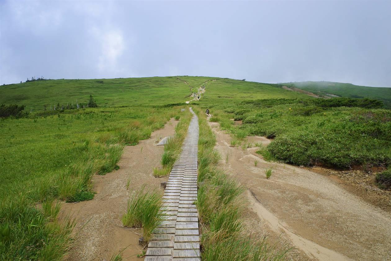 太郎平湿原に広がる木道路