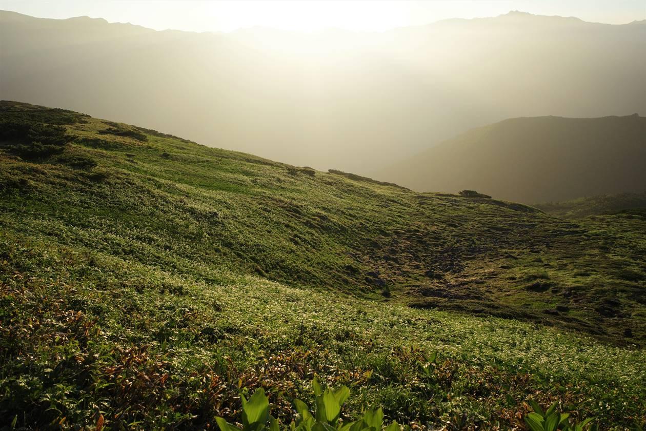 朝日を浴びる北ノ俣岳の湿原