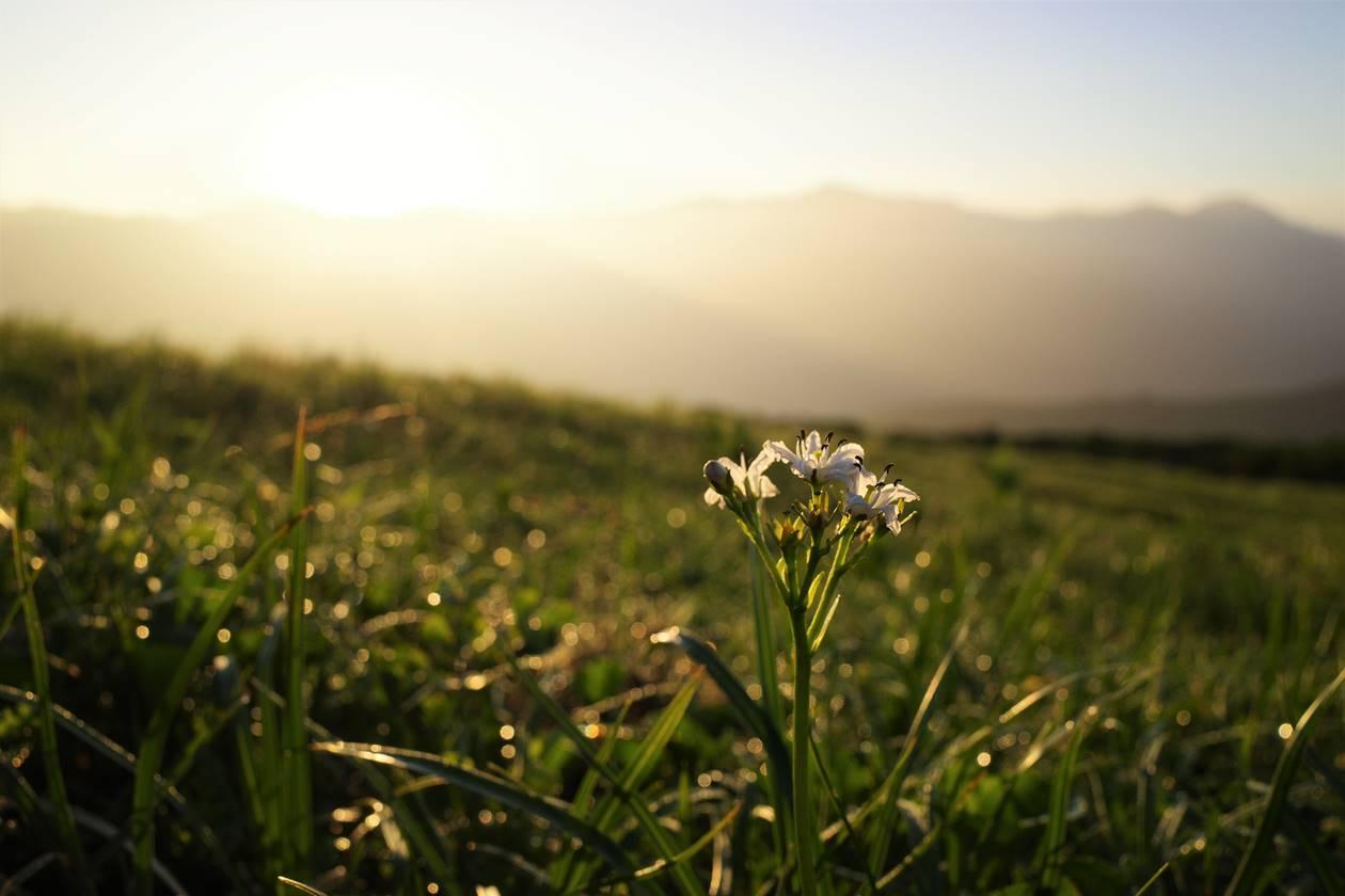 朝日に咲く花