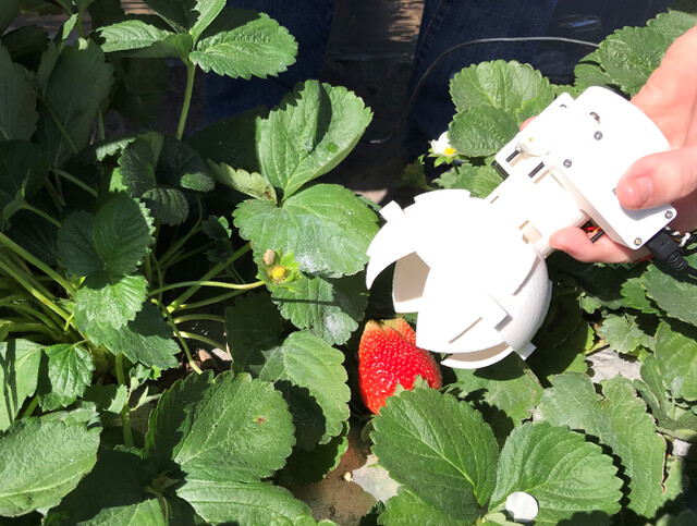A tool to pick strawberries