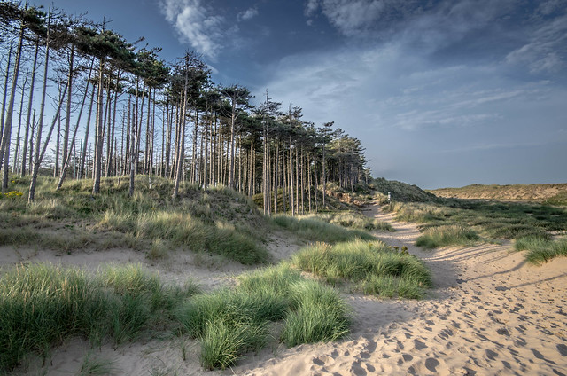 Trees and sand