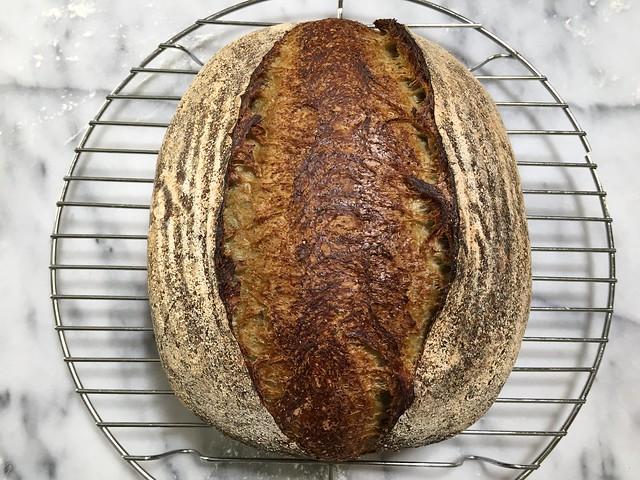 Whole Wheat 25% - Matcha