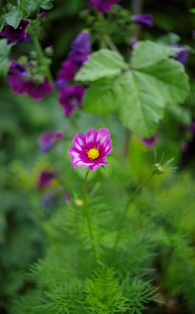 In a country garden...  2020-07-22