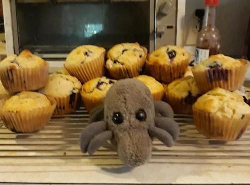 Muffin Mite