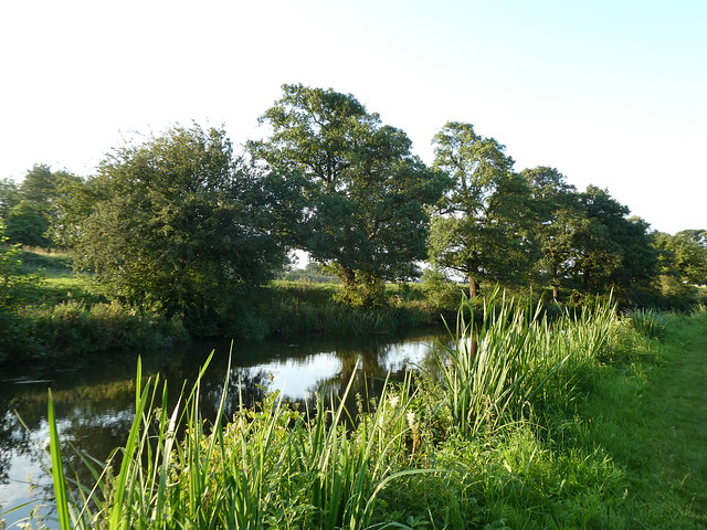 20.08.15 - Claughton [Trees on Lancaster Canal] 200809