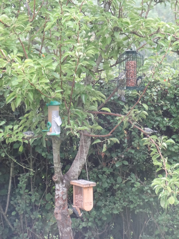 Birds busy on the bird feeders
