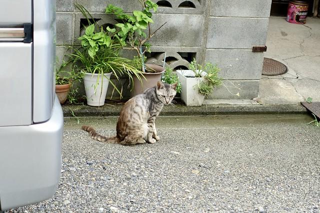 Today's Cat@2020ー08ー15
