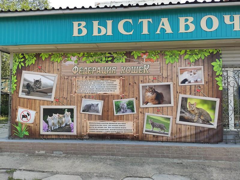 Ленинск-Кузнецкий - Федерация кошек
