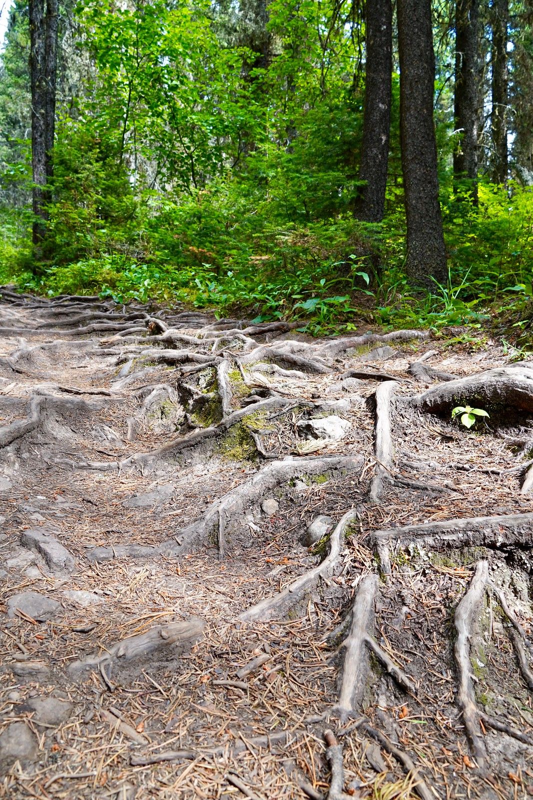 Roots of the path