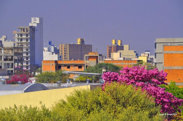 Lapachos 2020
