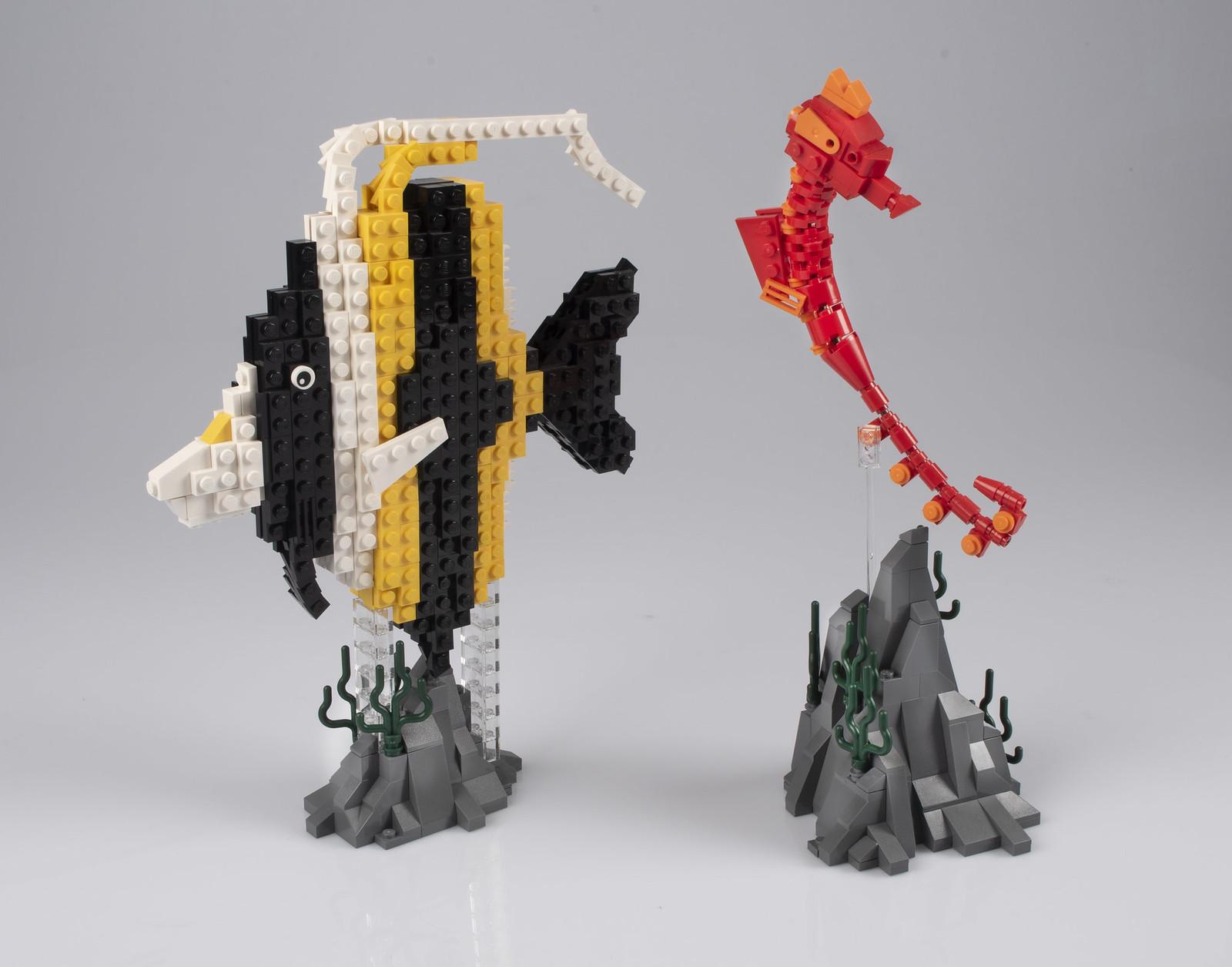 Seahorse & Moorish Idol