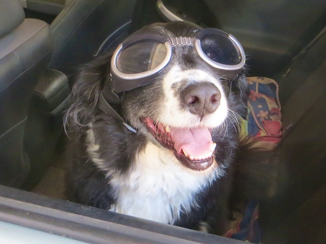 walter got a pair of doggles!