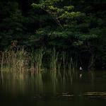 湖畔の情景 #4ーLakeside scene #4