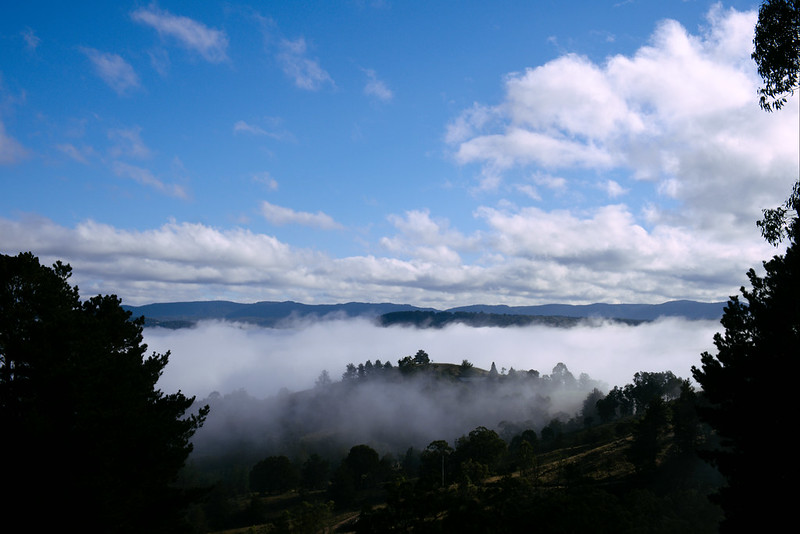 Fog surrounds Kanimbla Valley