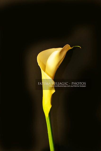 Lily Spring 2020 DSC_1370