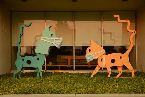 okc oklahomacity 2020 august midtown mask covid vet veterinary cat dog statue midtownvets sunset