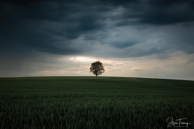 The Schlierstadt Tree