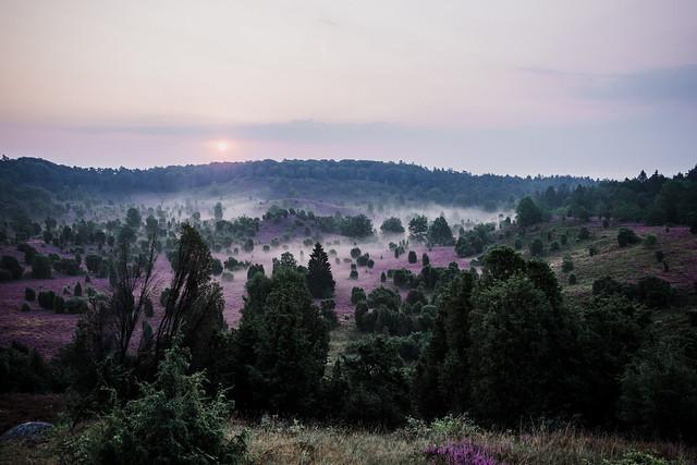 morning dew   l   7 a.m.   l   1   l   2020