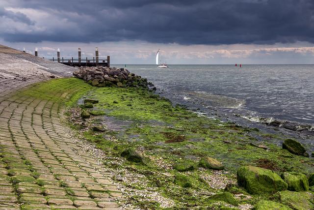 It's a green world / Oudeschild / Texel 2020