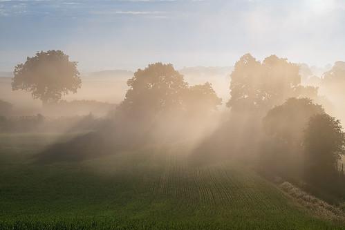 weethley warwickshire sunrise mist misty glow light trees landscape summer summermist sony a7iii 70200mmf4 jactoll