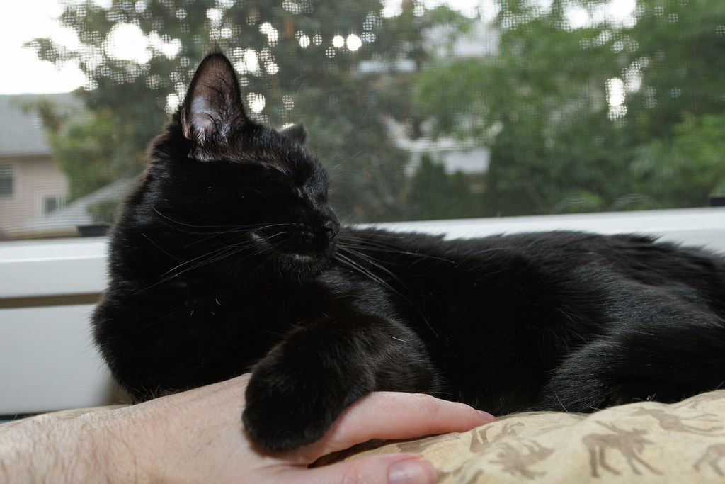 Our cat Emma sleeps on a pillow and my hand in August 2008. Original: _MG_7206.cr2