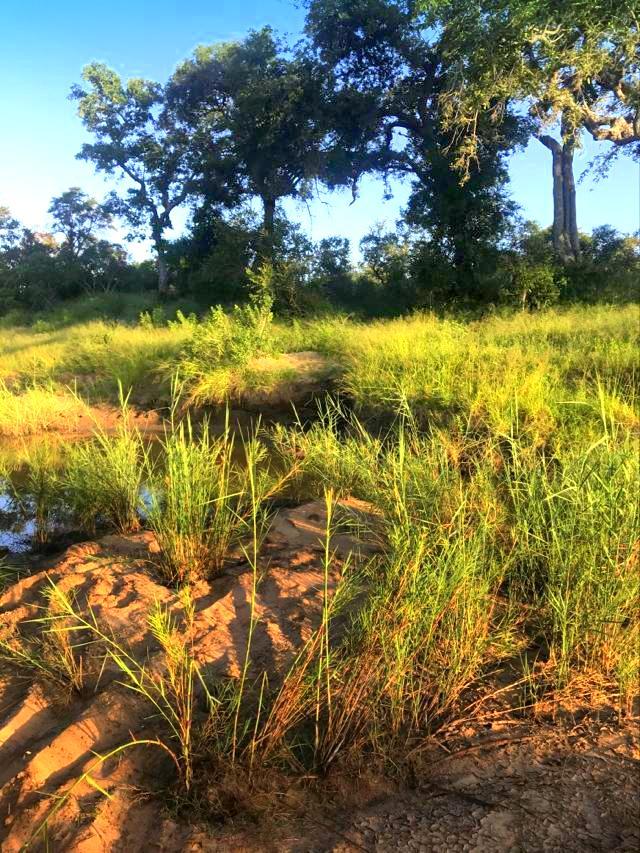 Savanna Lake Shore