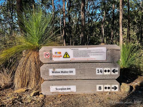australia mtjoyce qld queensland wyaralongdam xanthorrhoea bushwalk bushwalking grasstree mountainbiketracks seqld sign