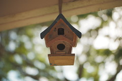 A bird's home