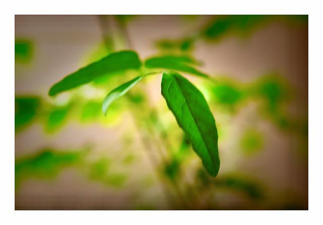 Green—leaves