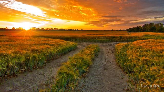 Sonnenuntergang über West-Rügen