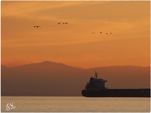 cargoshipatsunset ships shipsandvessels ship boats boat allboats cargoships wonderfulnature water waterscenes sunset sunsetskies sunsetclouds sunsetoutlines birds birdsofafeather birdwatch mountains burrardinlet westvancouverbc