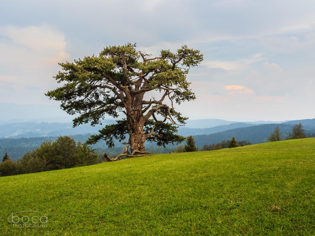 Sveti bor, Kamena gora