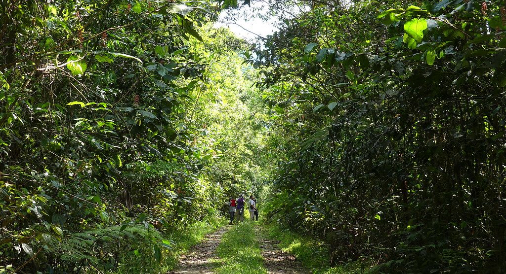 The Sunstreak Tour group on the Ticary Amazon Lodge track, near Chontachaca, lower Manu road, Cusco P1080057