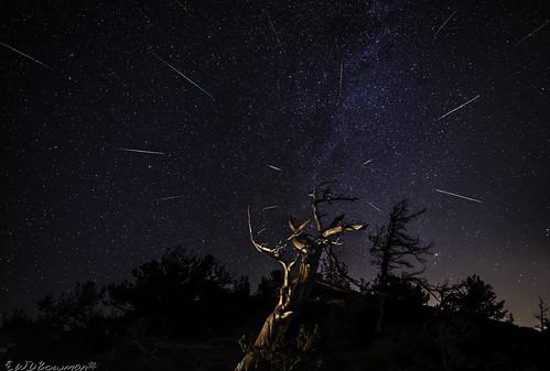 perseidmeteorshower meteors shootingstar grassytop limberpines limberpineskeletons night stars milkyway