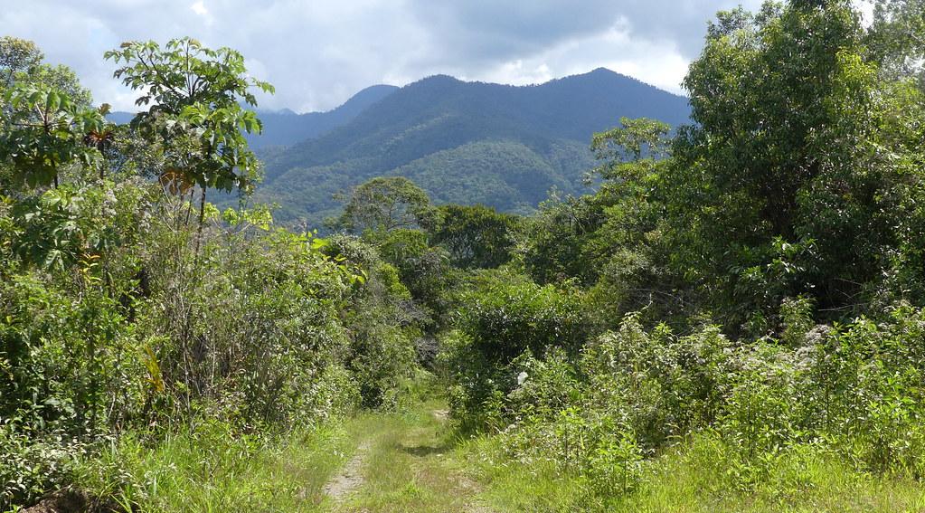 The Ticary Amazon Lodge track, near Chontachaca, lower Manu road, Cusco P1070957