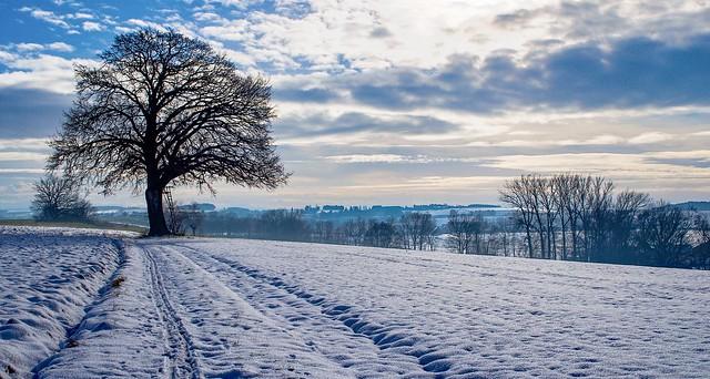 Winterlandschaft in Tettenham, Bayern
