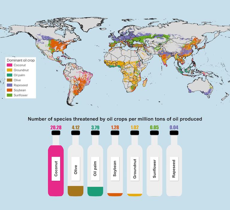 各種食用油作物的分佈與所威脅的物種數量