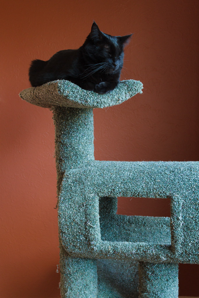 Our cat Emma sleeping on the cat tree on November 22, 2009. Original: _MG_1395.cr2