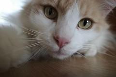😽 #RicohGR #cats #CatsOfInstagram #catsitting #CatCloseUp #macro
