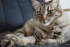 Hey there #RicohGR #cats #CatsOfInstagram #catsitting #CatPortrait