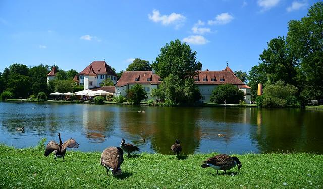 Munich - Geese at Schloss Blutenburg