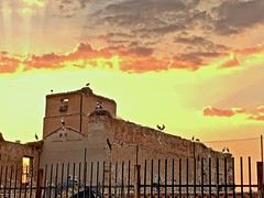 Cigüeñas en el Palacio Arzobispal al atardecer