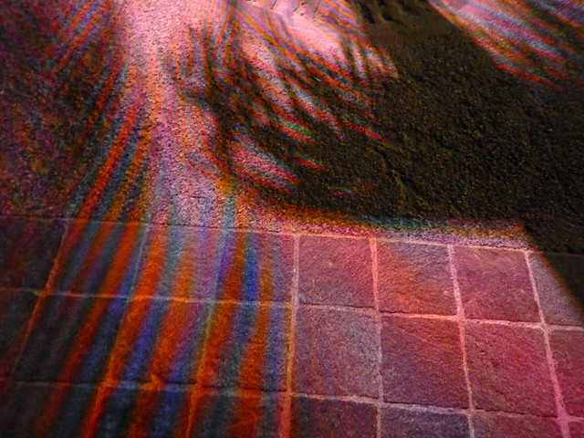 A palm shadow with coloured lights in the Puerto Vallarta night, Mexico