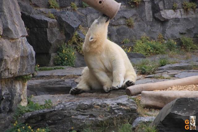 1Eigene Bilder Tierpark Friedrichsfelde 08.08.20 Bulk Watermark (12)