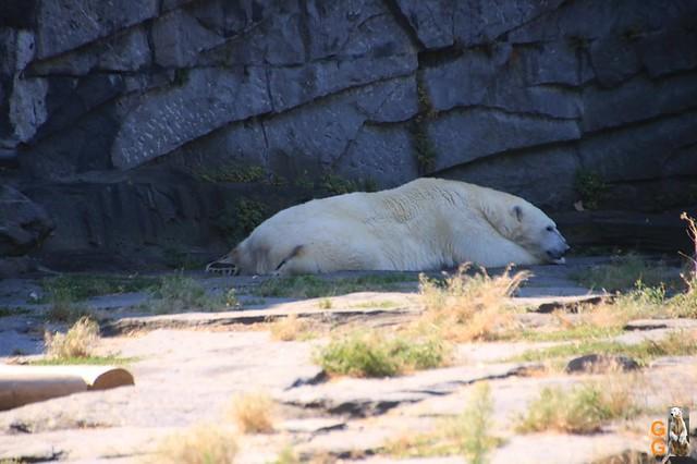 1Eigene Bilder Tierpark Friedrichsfelde 08.08.20 Bulk Watermark (11)