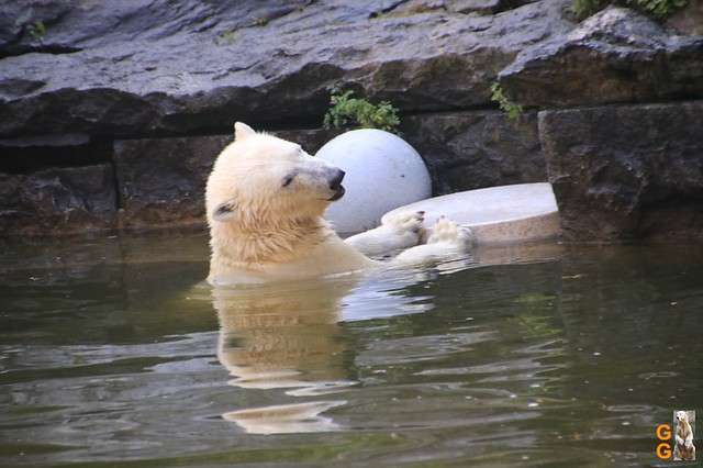 1Eigene Bilder Tierpark Friedrichsfelde 08.08.20 Bulk Watermark (3)