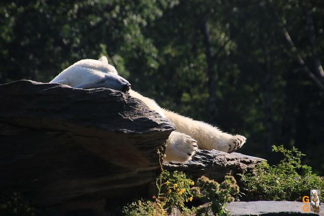 1Eigene Bilder Tierpark Friedrichsfelde 08.08.20 Bulk Watermark (2)