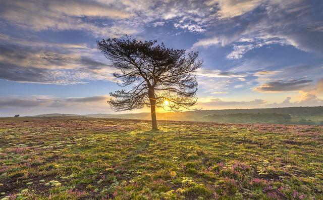 Ibsley Sunrise
