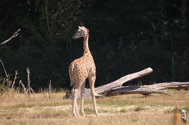 1Eigene Bilder Tierpark Friedrichsfelde 08.08.20 Bulk Watermark (36)