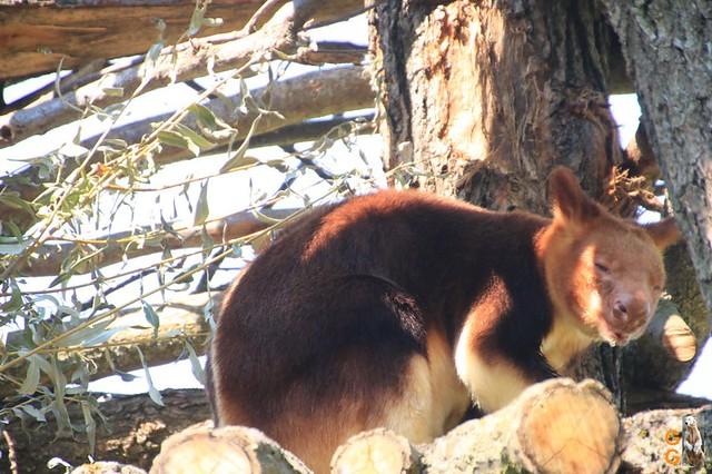 1Eigene Bilder Tierpark Friedrichsfelde 08.08.20 Bulk Watermark (19)